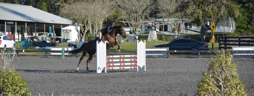 Ascend Equestrian
