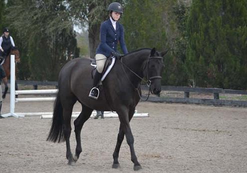 Ascend Equestrian Lessons