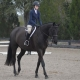 Ascend Equestrian Lessons
